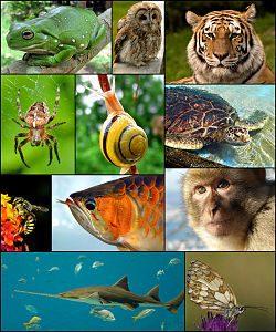 Organizmi v naravnem in umetnem okolju